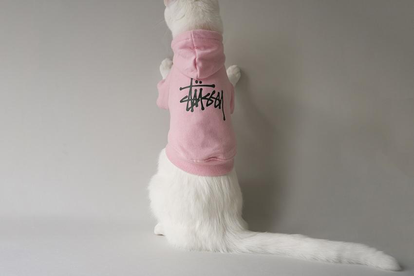 Самое стильное домашнее животное Инстаграмма – кот Заппа