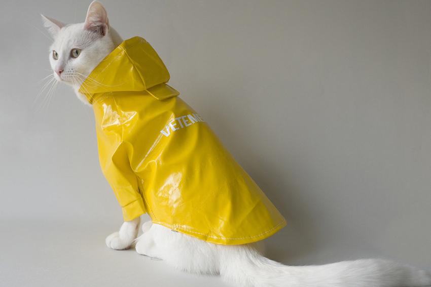 cat-streetwear