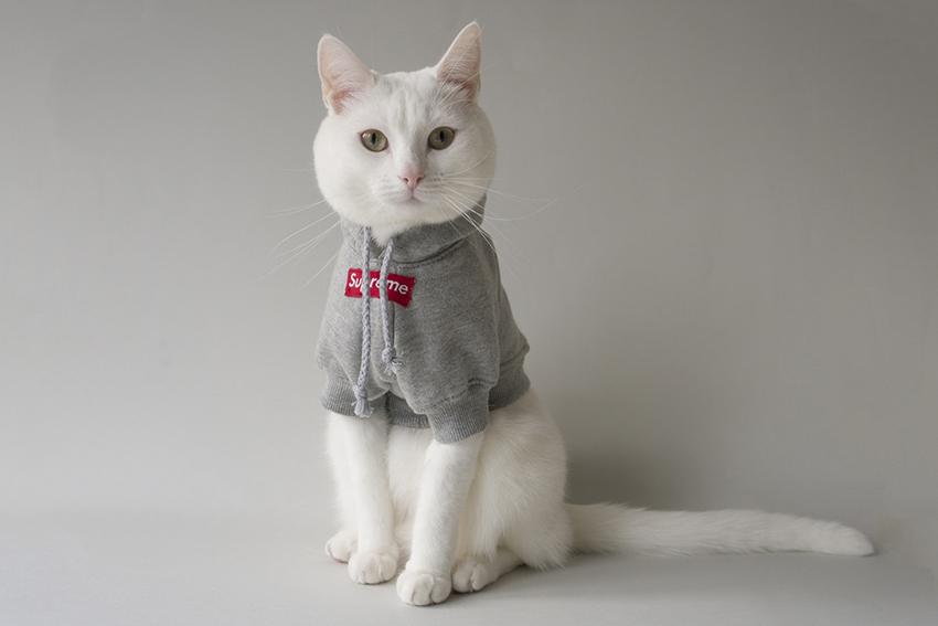 cat-streetwear 4