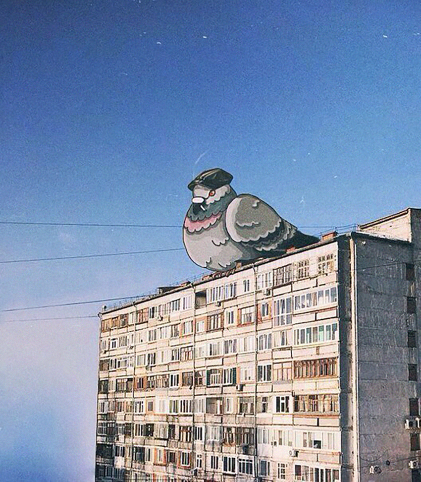 Outskirts Moscow голубь